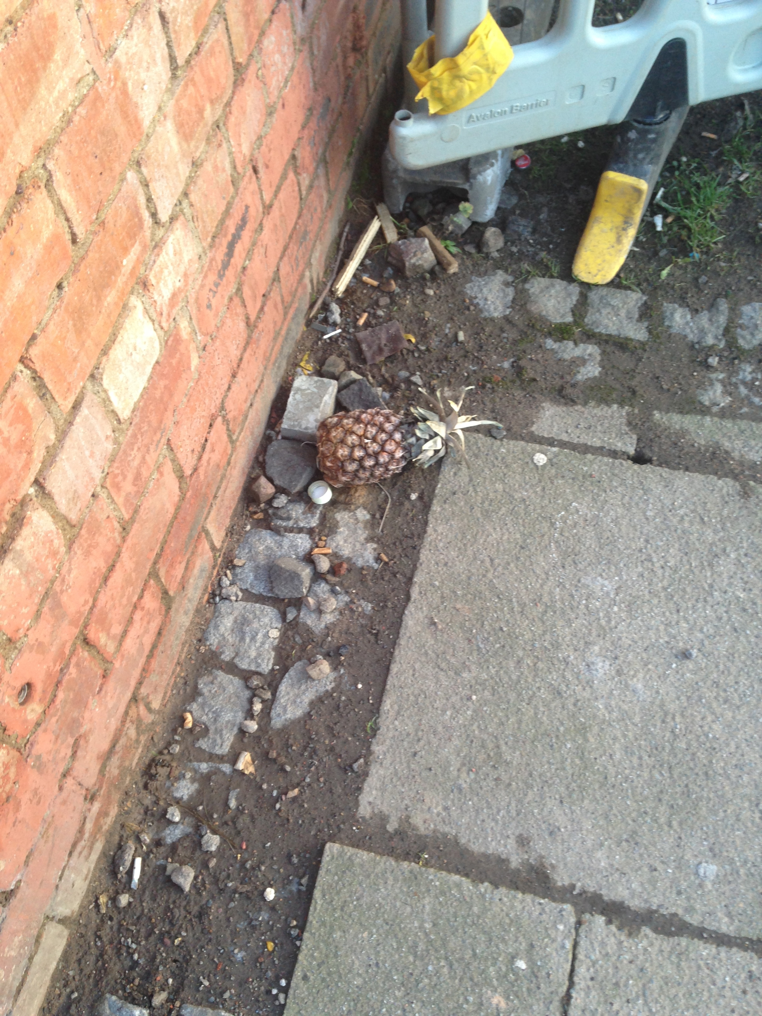 Having stared at this for a solid 15 seconds, I can confirm it is a pineapple.