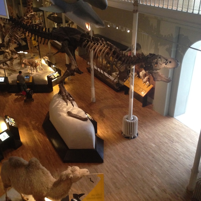 My first ever trip to the museum happened because I heard they had a dinosaur. They do. It is excellent.